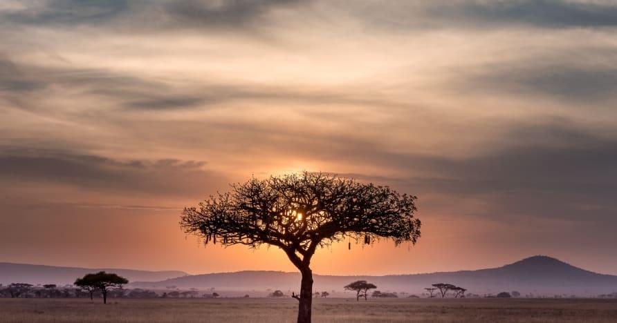 Situasi Perjudian Dalam Talian di Afrika