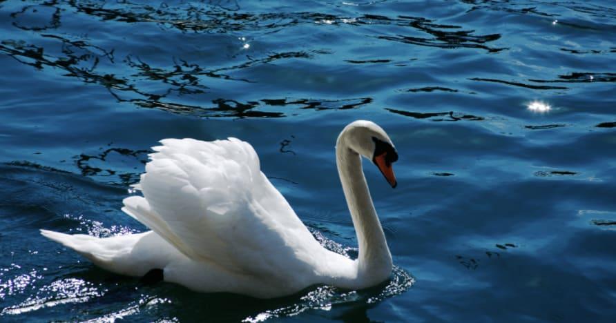 Royal Swan Ainsworth Gaming: Ulasan Lengkap